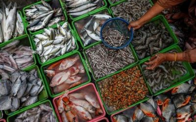 WTO seeks to land big prize after 20 years of fish talks